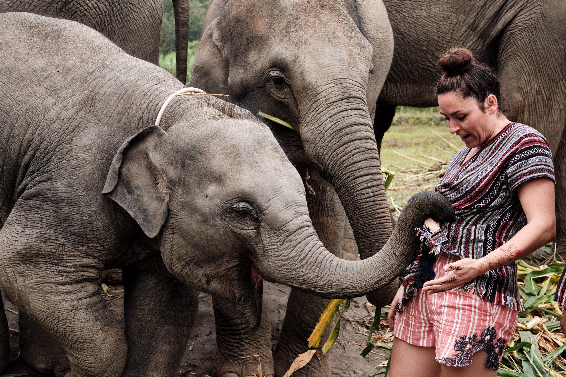parque elefantes en tailandia